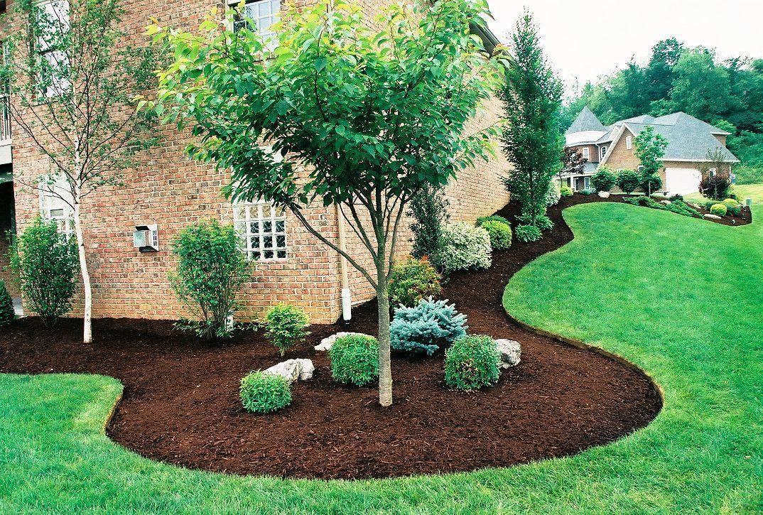 Small Backyard Guest House Plans   Backyard trees
