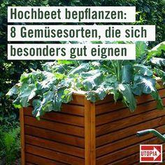 Photo of Plantación de camas elevadas: estas 8 verduras son particularmente adecuadas