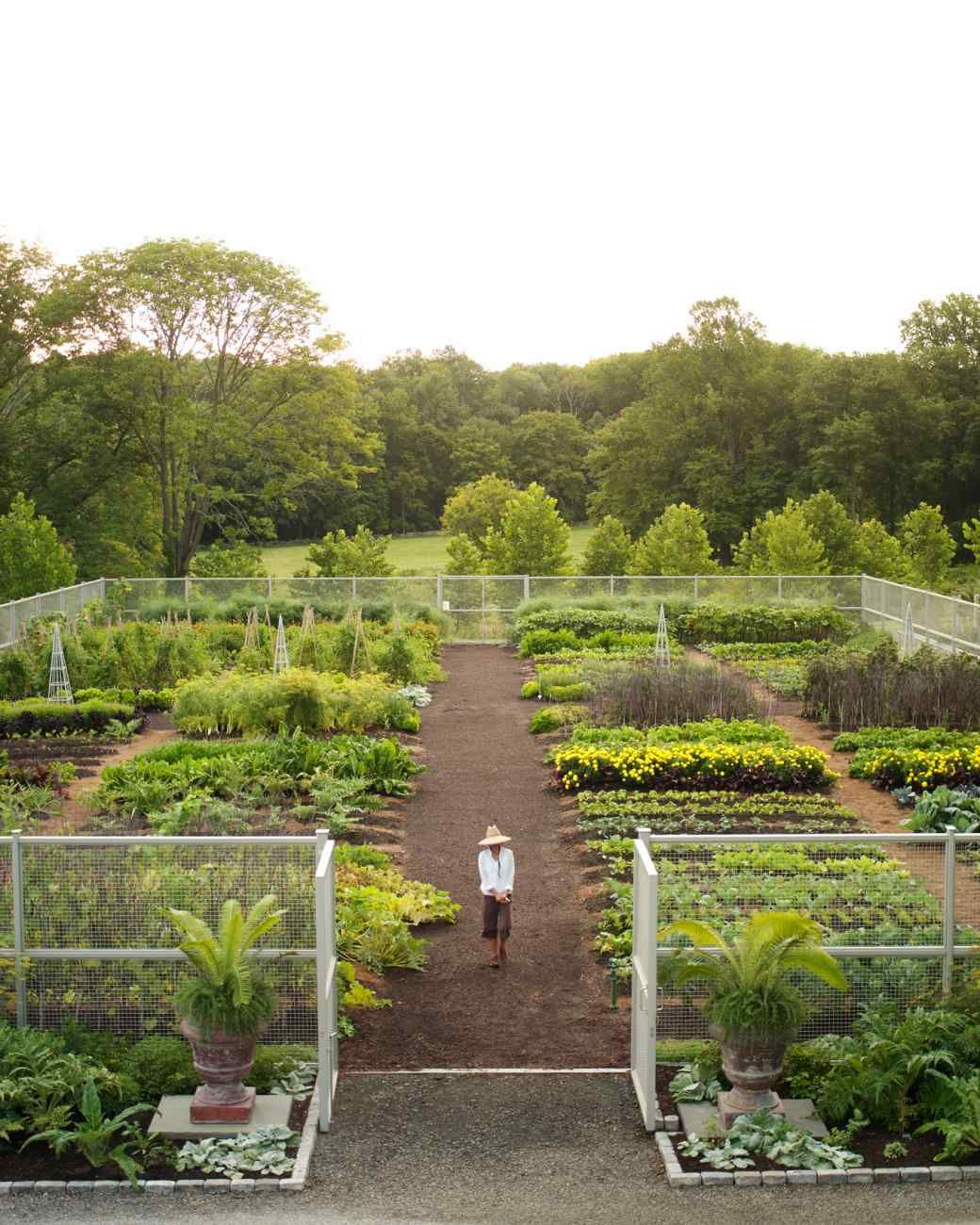 Succession Planting Guide #garden
