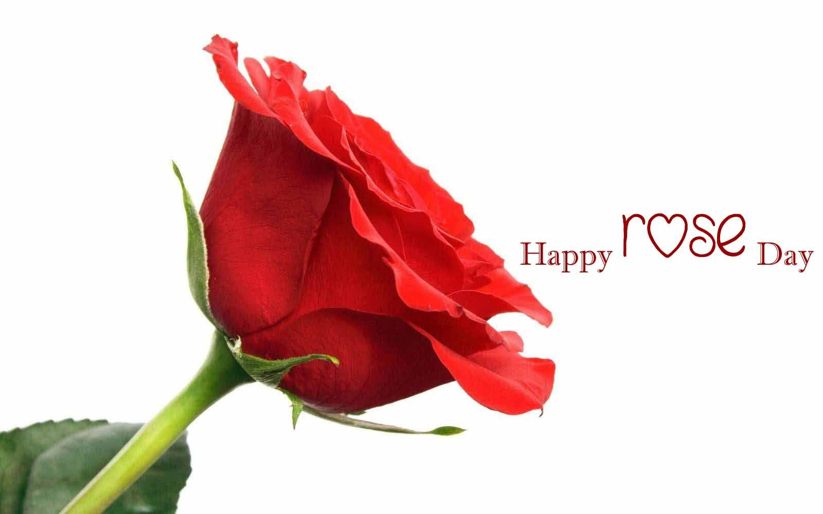 Happy Rose Day Images Photos Pictures Pics Hd Wallpapers Free Download Valentines Day 2020 Images Pho Rose Day Pic Rose Day Shayari Flowers Free Download Happy rose day wallpaper hd photos