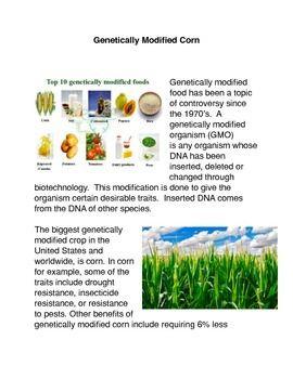 Genetically Engineered Corn Genetics Genetically Modified Food