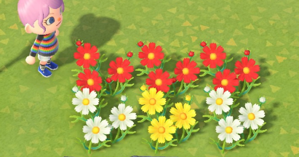 Check Out How To Get Breed All Cosmos Colors In Animal Crossing New Horizons Switch Acnh Includes How To Breed In 2020 Animal Crossing Cosmos Flowers Cosmo Color