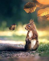 Teddies, Beautiful and Old Teddies, Beautiful and Old Esta imagen tiene 0 r ... -  Teddies, Beautiful and Old Teddies, Beautiful and Old Esta imagen tiene 0 repins. Autor: Zummiswelt - #Animalesacuaticos #animalesadorables #Animalesanimados #Animalesbebes #Animalesdelaselva #Animalesdibujos #Animalesfantasticos #animalesgraciosos #animaleshermosos #Animalesmarinos #animalessalvajes #Animalestiernos #beautiful #Esta #imagen #teddies #tiene