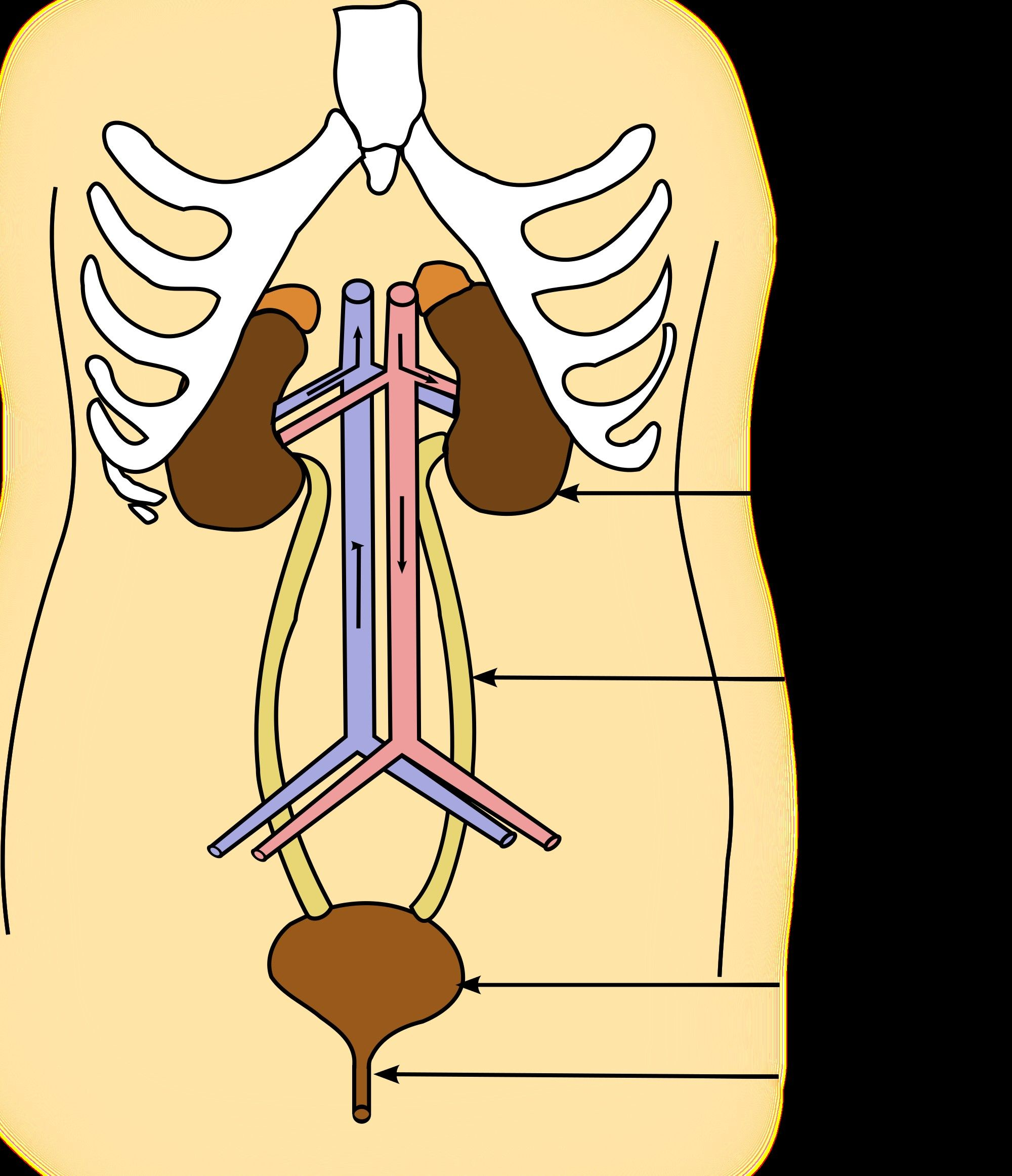 6 Prime Digestive System Worksheet High School Di
