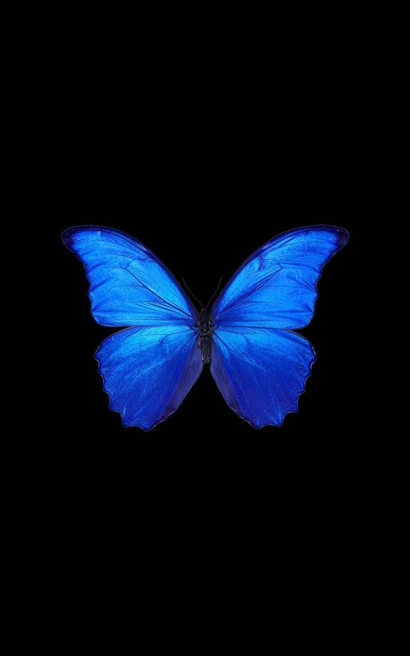 Butterfly wallpaper by Emilywolf003 - e675 - Free on ZEDGE™