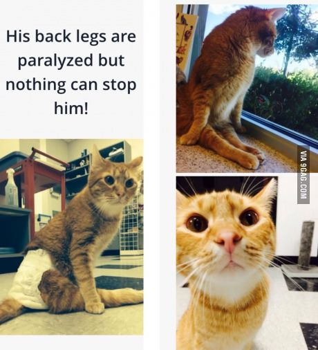 Jesse-the cat that was thrown out of a speeding car as a kitten... but he still trusts and loves humans
