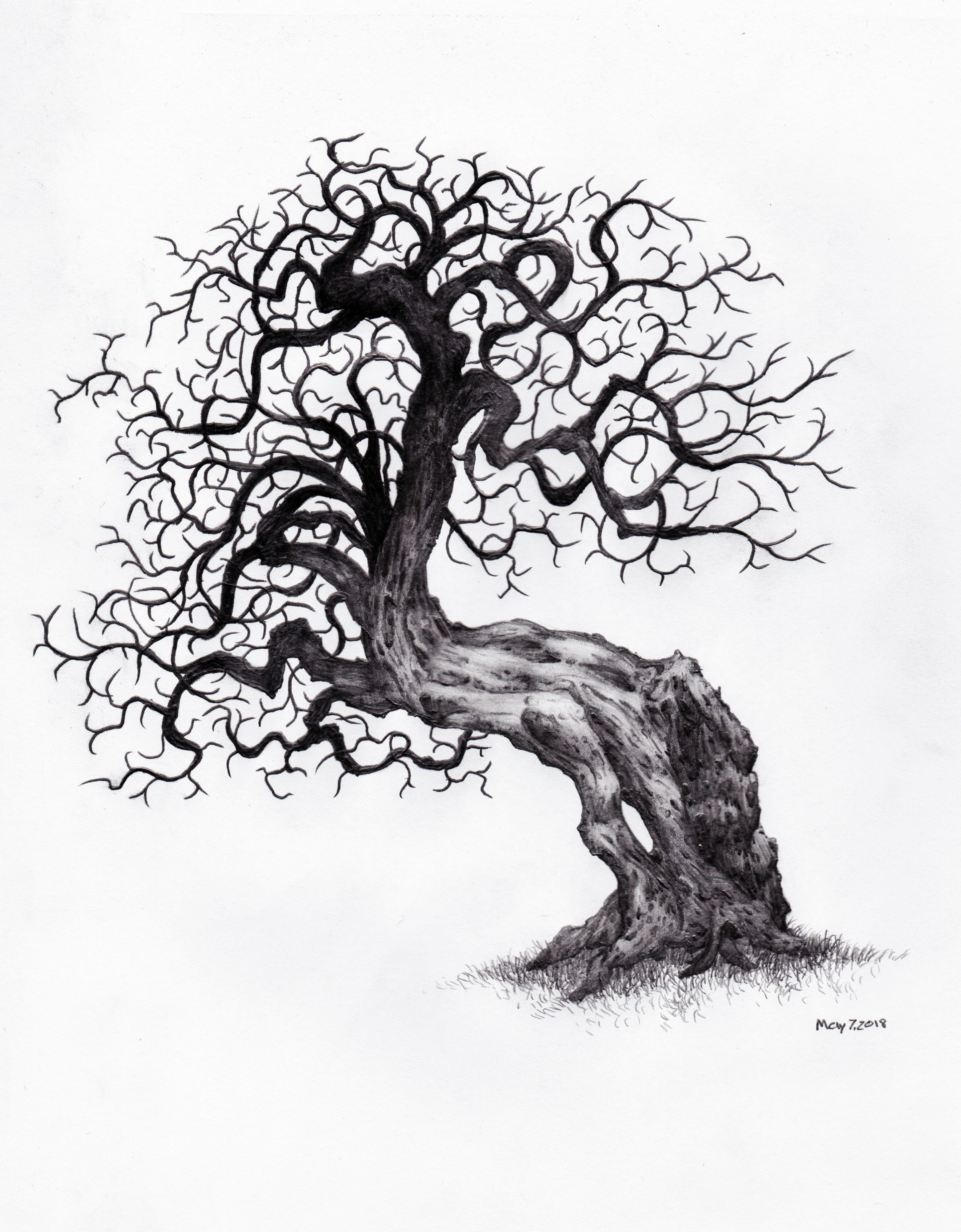 daily tree sketch