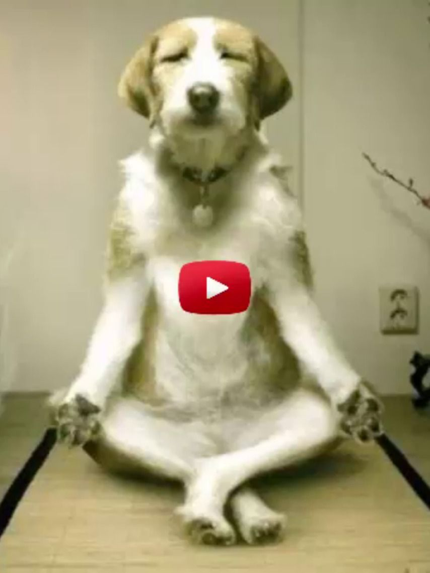 The Strangest 50 Behaviors Dogs Do You Will Not Believe It In 2020