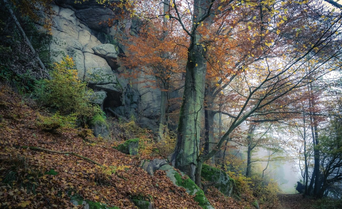 Download nature autumn road rock trees fog high quality hd - 10k wallpaper nature ...