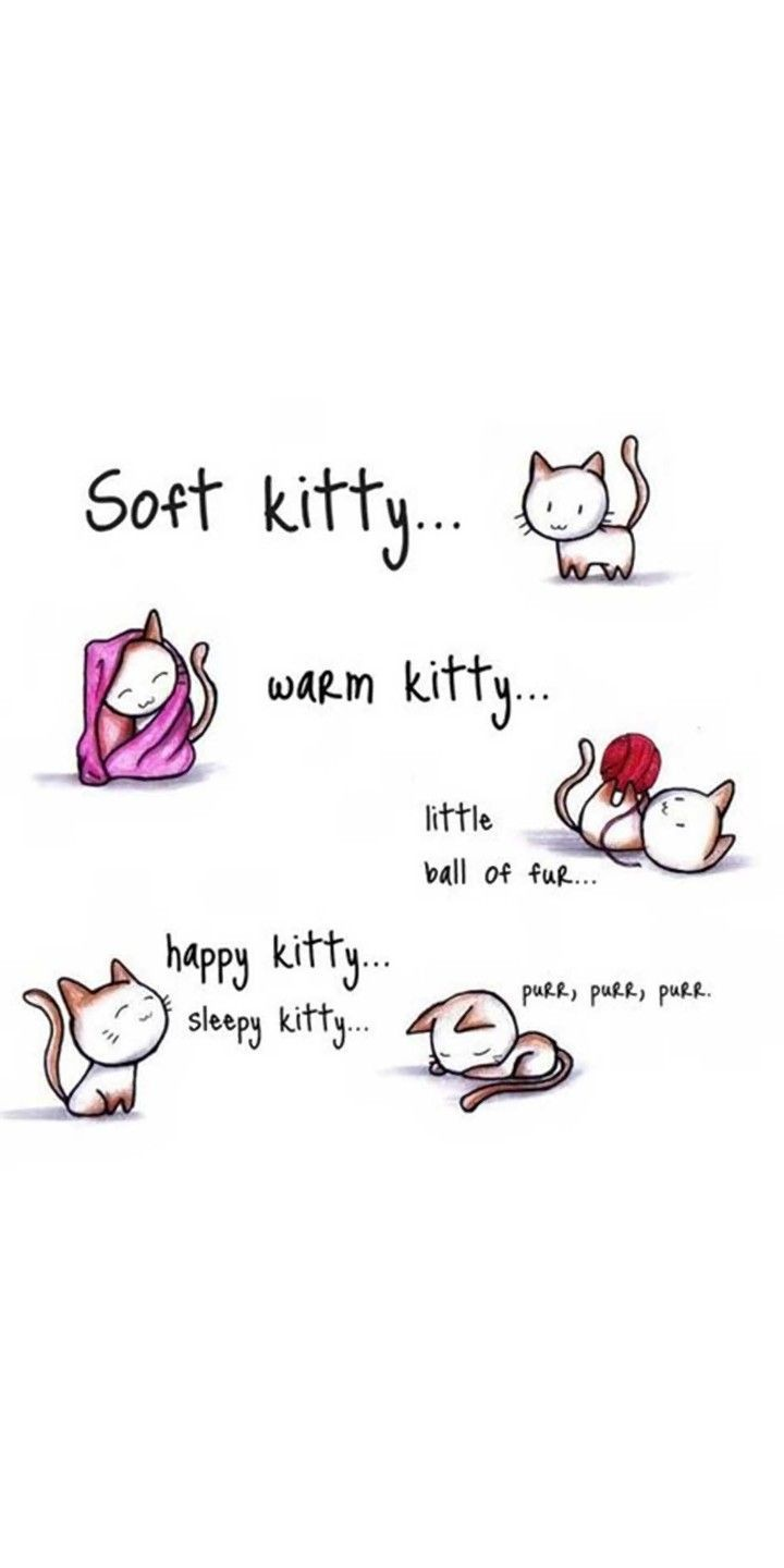 Sleepy Kitty Song Cats And Kittens