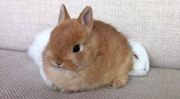 動画 面白いもの集めました 子ウサギ ペット 小動物 かわいい動物の赤ちゃん