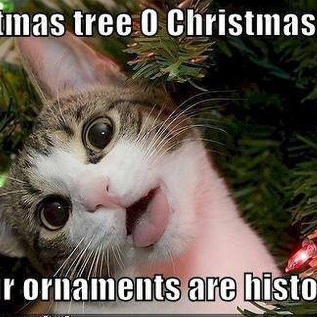 Funny Cat Pictures No Swear Words Cat Best Of The Funny Meme Christmas Memes Funny Christmas Memes Christmas Humor