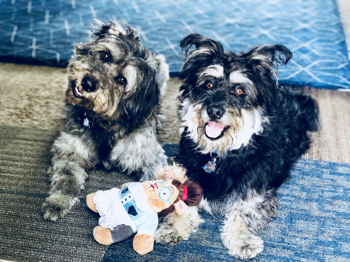 How To Safely Sanitize Dog Toys Bowls And Accessories With The Homeright Steam Cleaner Dog Toys Dogs Steam Cleaners