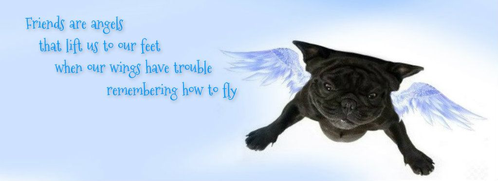 Pug Facebook Cover Photos For Your Timeline Pug Quotes With