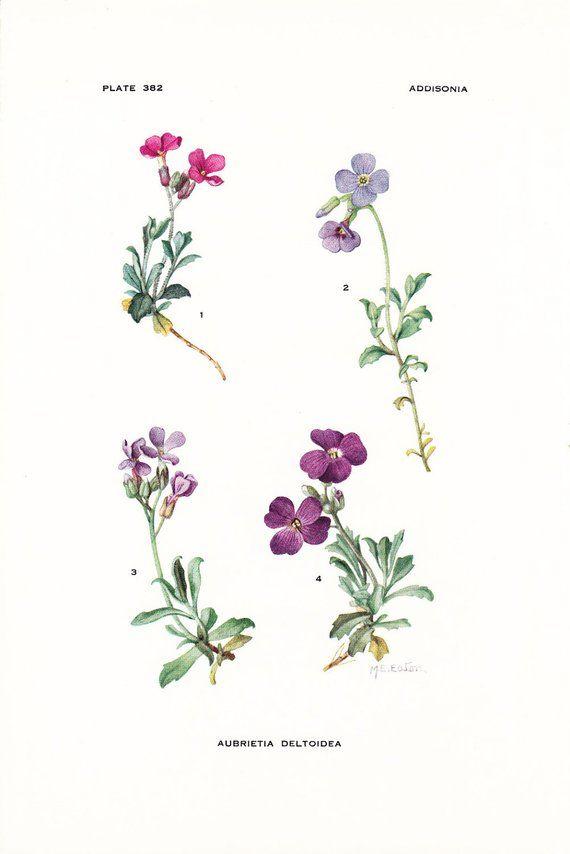 Pin Af Emilie Krageskov Pa Botaniske Plakater Botaniske Plakater Tatoveringer Plakater