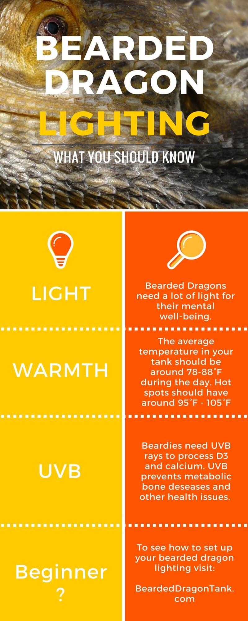 The Ultimate Bearded Dragon Lighting Guide Baardagaam Reptielen