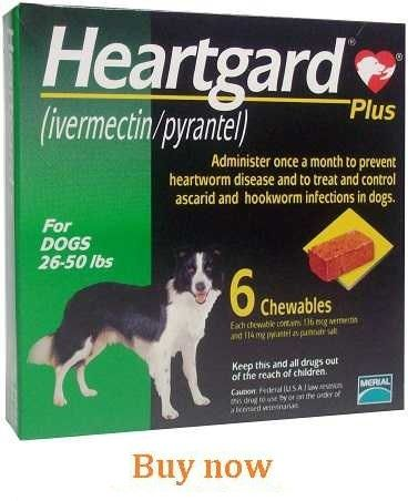 Buy Heartgard Plus For Dogs Online Cheap Without Vet Or Prescriptions Heartworm Prevention Heartworm Disease Heartworm