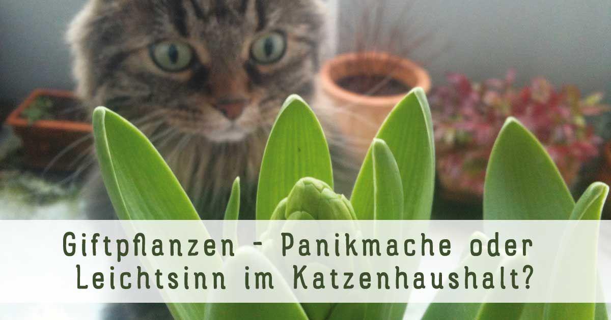 """Risiko """"Giftpflanzen im Katzenhaushalt"""": Panikmache oder Leichtsinn? https://cat-competence.de/katzen-momente/giftpflanzen-panikmache-oder-leichtsinn-im-katzenhaushalt/"""