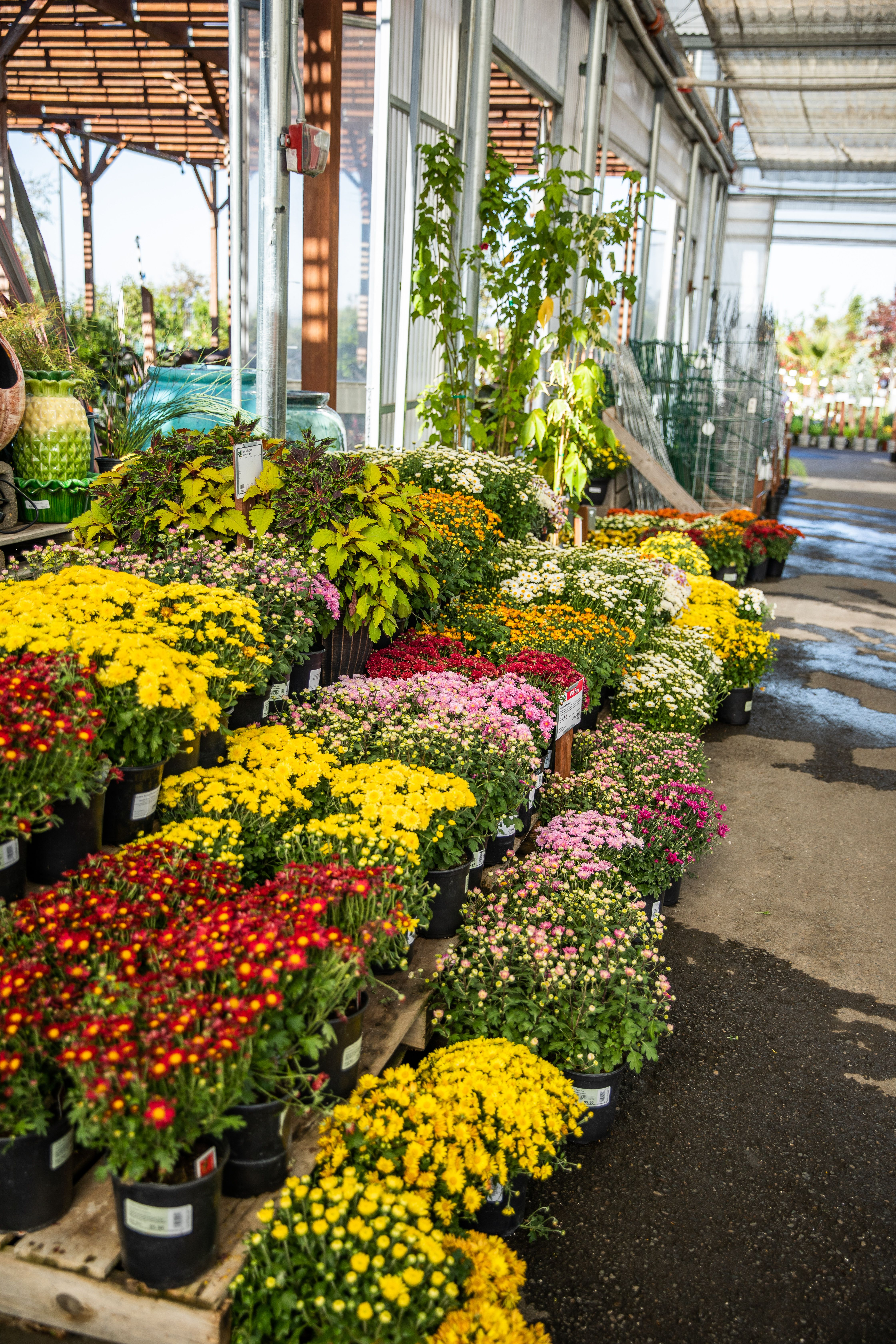 Pin By Green Acres Nursery Supply On