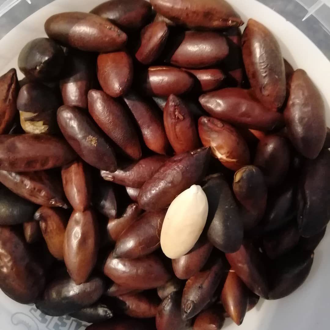 Baru Nuts These Nuts Have An Amazing Nutrition Profile Packed With Protein All Essential Amino Acids More Fibre Then Any Other N Superfoods Food Nutrition