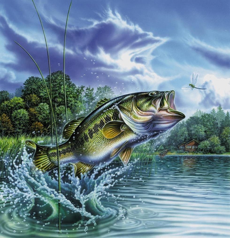 Black Bass Wallpaper Google Search Fish Painting Fish Bass Fishing