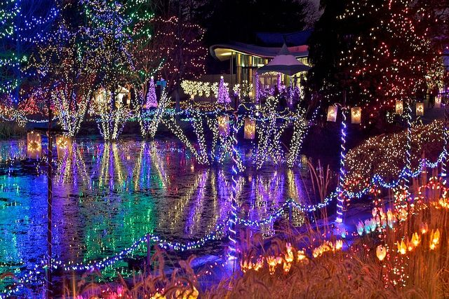 Norfolk Botanical Gardens Christmas Lights Walk