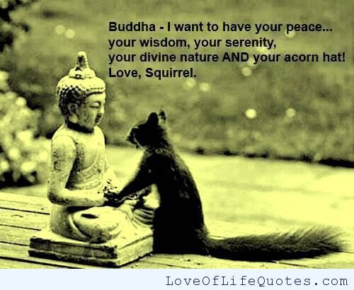 Buddha Love Quotes Prepossessing Squirrel Meets Buddha  Httpwww.loveoflifequotesfunny . Design Decoration
