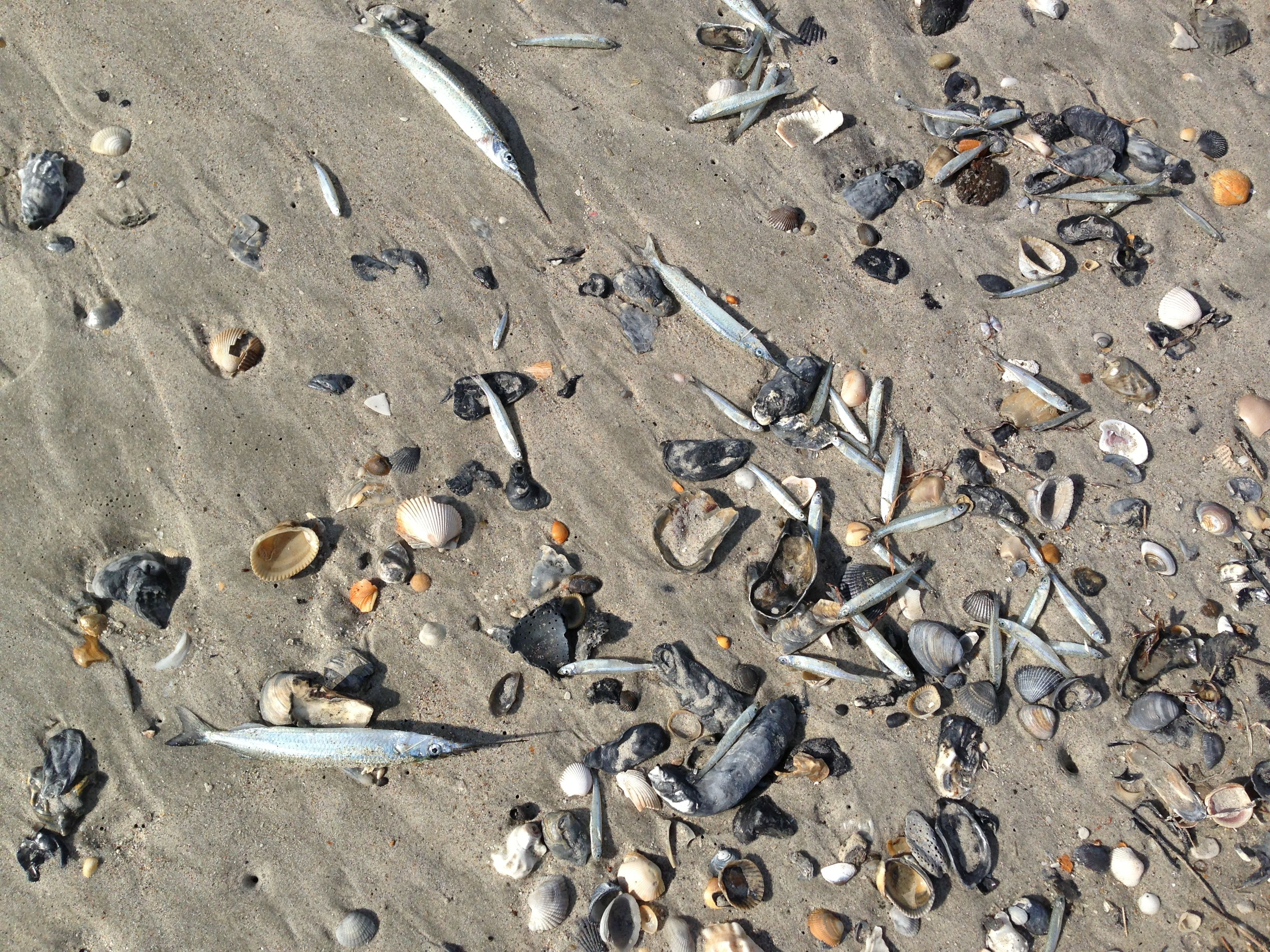 Lots of dead fish washed ashore