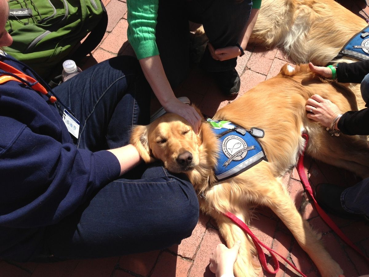 Photos Dogs Comfort Boston After Bombings Dogs Therapy Dogs