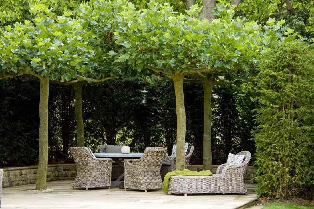 Platanen google zoeken bomen pinterest platanen zoeken en google - Een terras aan het plannen ...