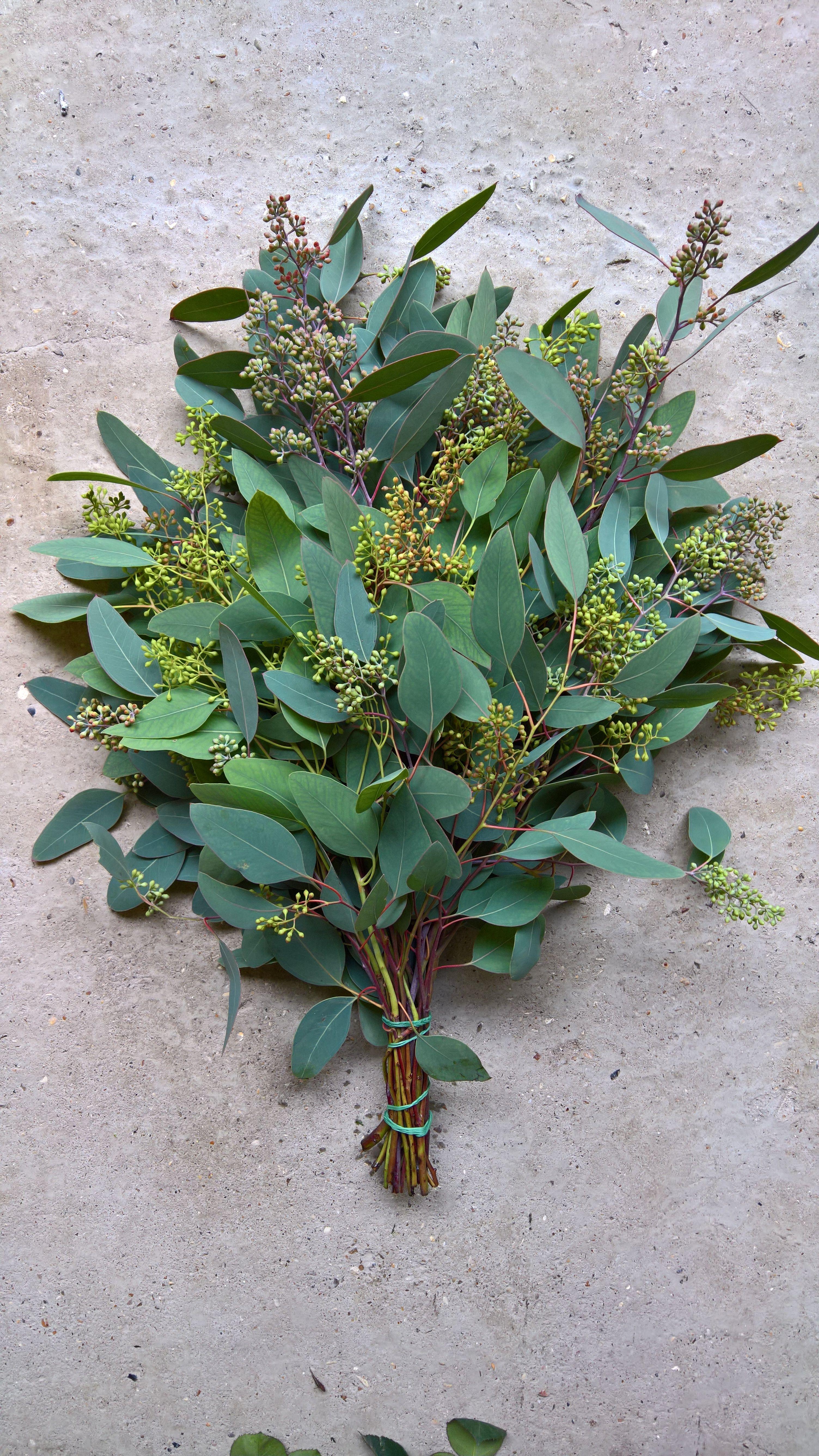 Eucalyptus Populus Strange Blooms Photoshoot 2 Blumen