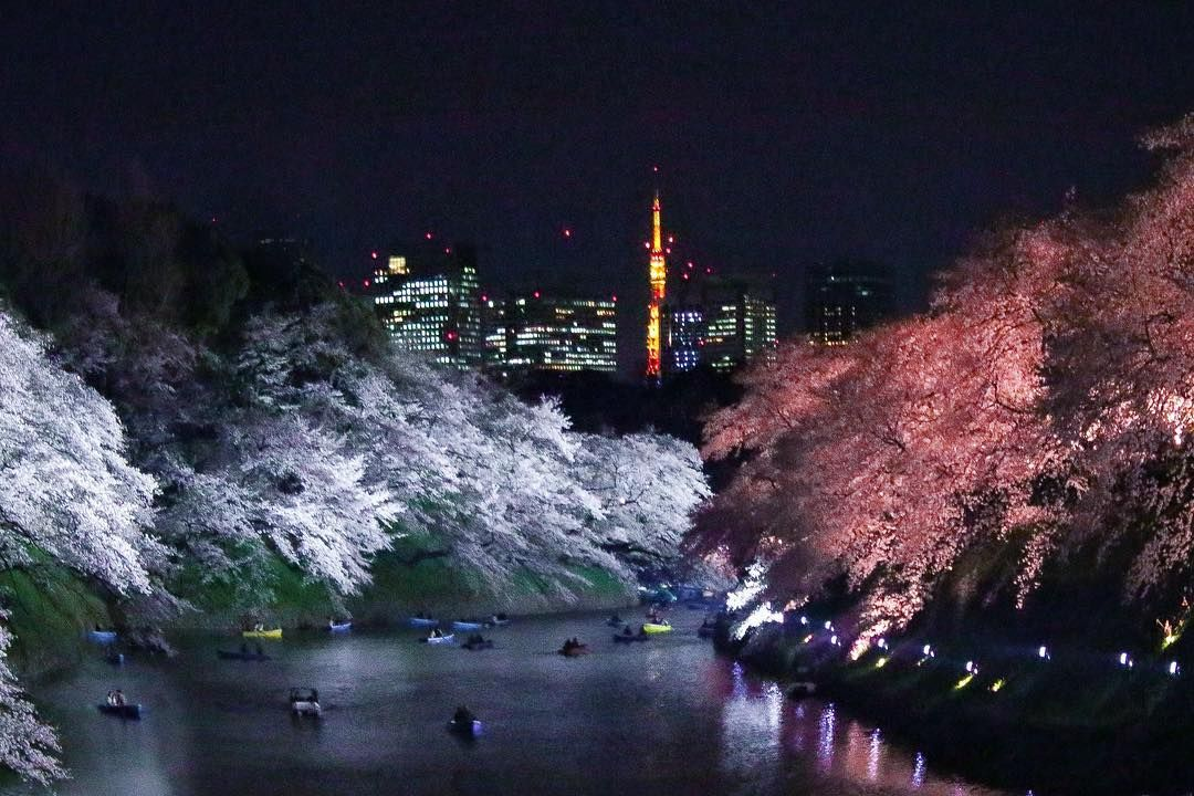 [New] The 10 Best Home Decor (with Pictures) -  Chidorigafuchi Park the best place to see the sakura  . . . #japan #igers_jp #landscape #写真好きな人と繋がりたい #japan_daytime_view #bestjapanpics #photo_jpn #superhubs #explorejapan #japan_of_insta #travelgram #visitjapan #instagramjapan #beautifuldestinations #naturelover #explorejpn #japan_night_view #agameoftones #ig_color #wowplacestogo #daily_photo_japan #bestoftheday #instatravel #color_of_day #wanderlust #instajapan #team_jp_ #wonderful_places #visua