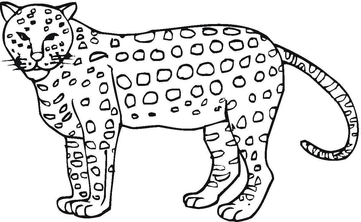 Cheetah Colouring In Coloring Pages For Kids Coloring Pages To Print Zoo Animal Coloring Pages