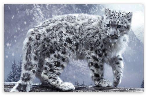 White Leopard HD desktop wallpaper : Widescreen : High Definition : Fullscreen : Mobile