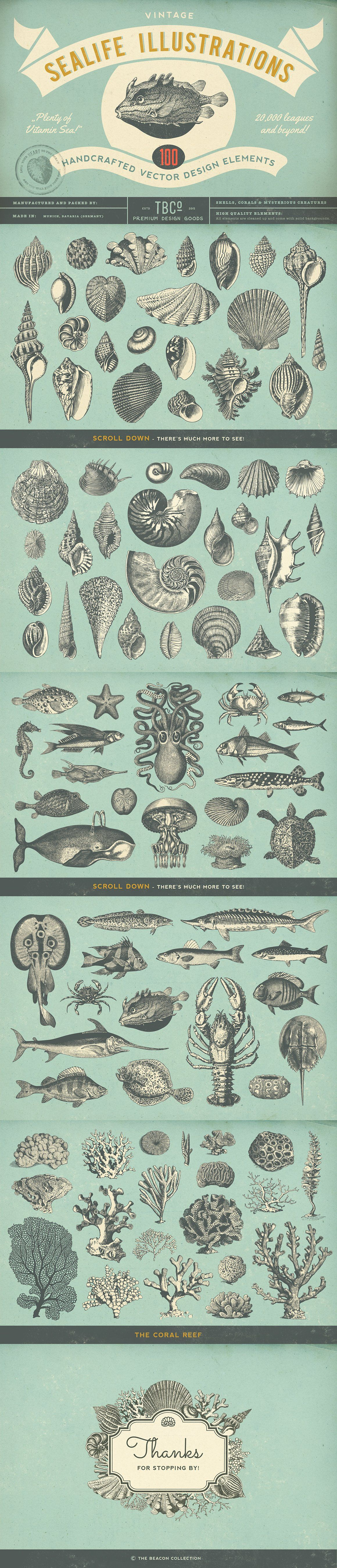 100 Vintage Sealife Illustrations by The Beacon Collection on @creativemarket