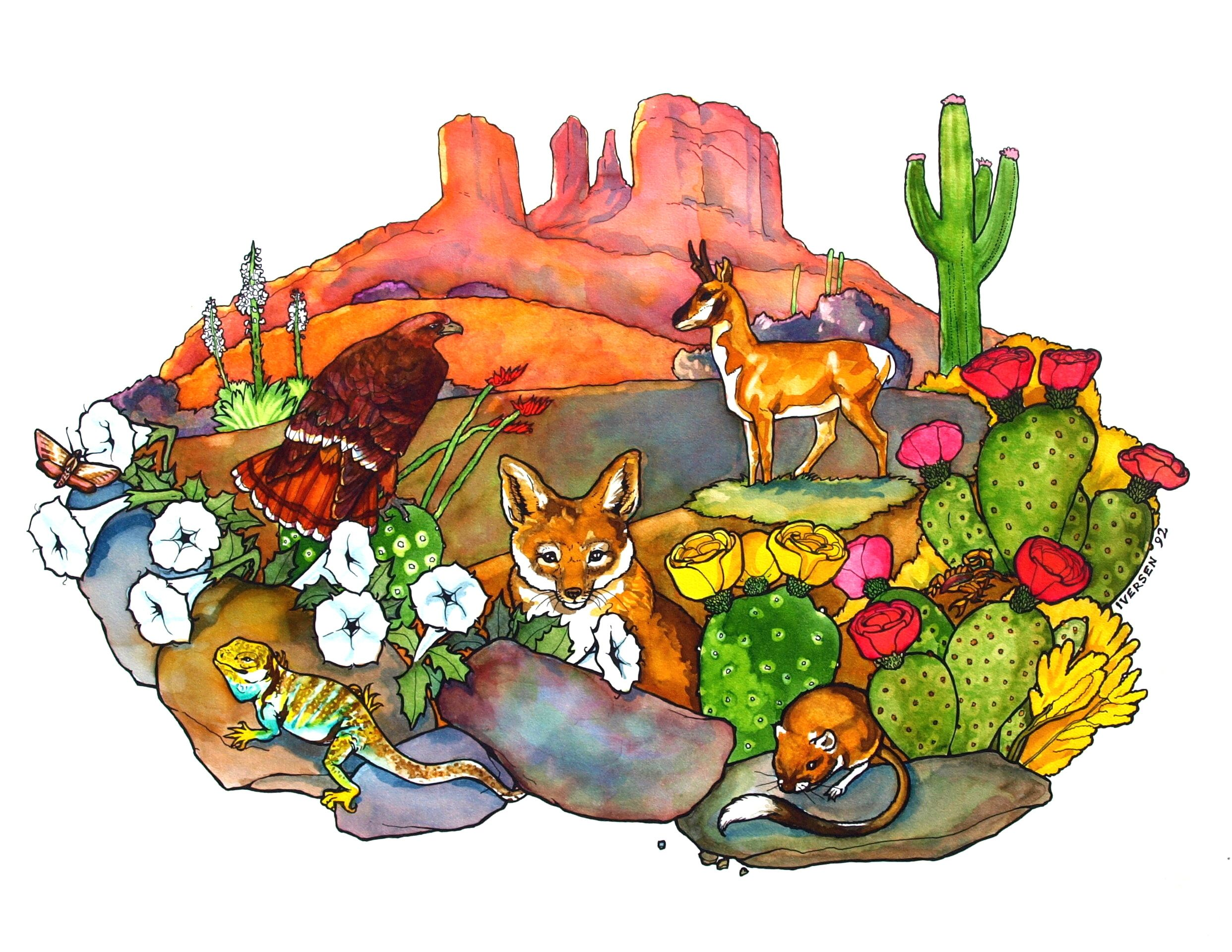 Desert Animals; water color, ink and dye. Drawings