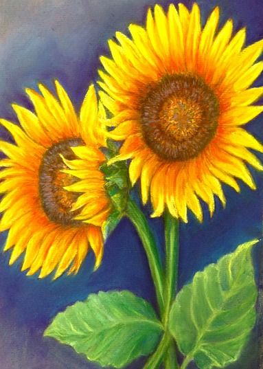 sunflower daze pastel on paper available for purchase