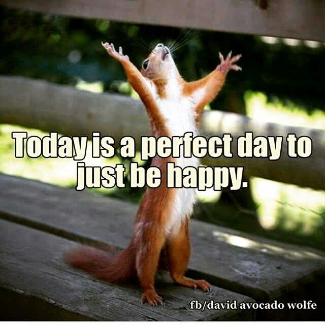 Sunday Squirrel Funny Peaceful Mind Peaceful Life Good Morning Beautiful People