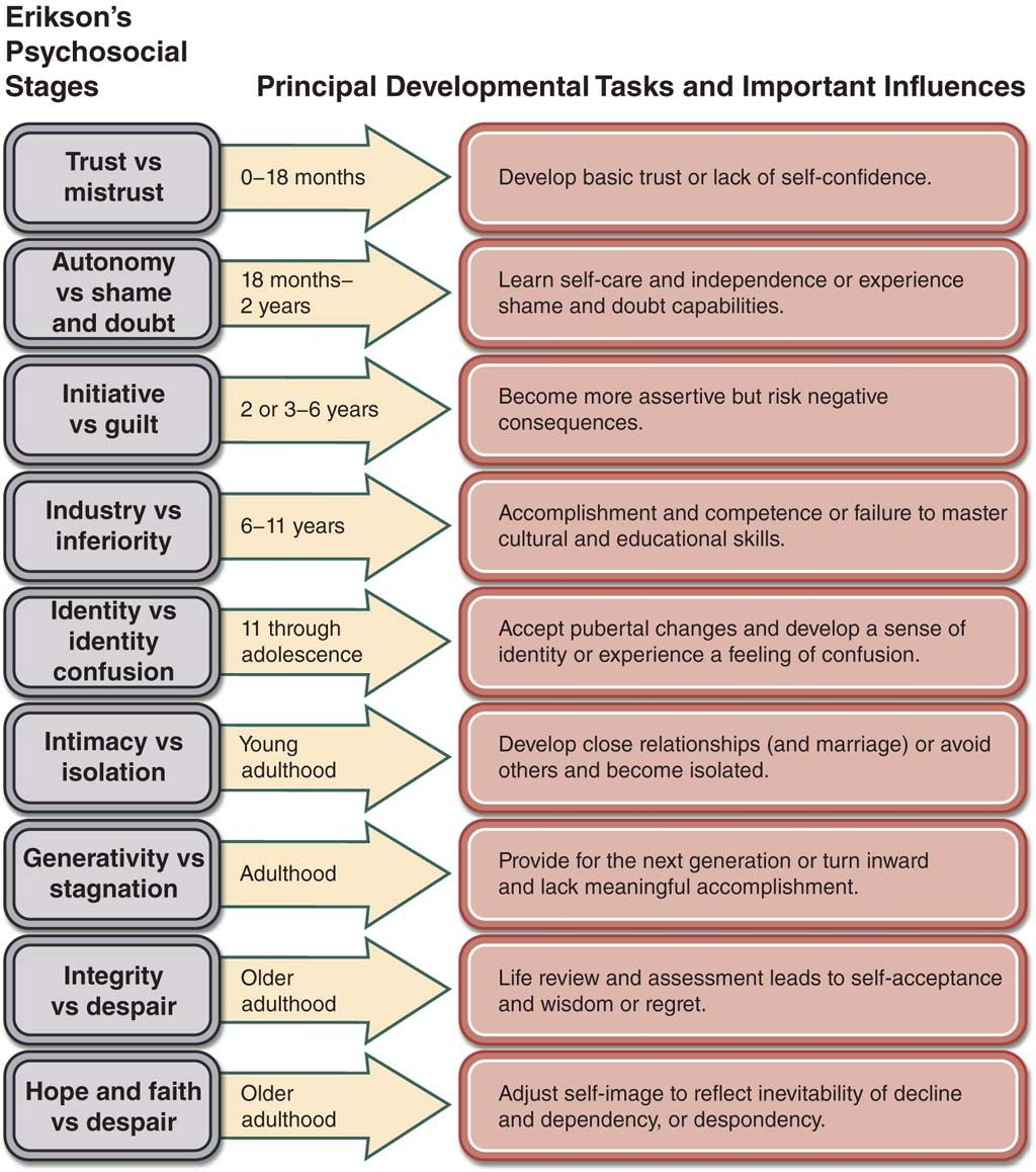 Illustration Displaying Erik Erikson S 9 Stages Of Psychosocial Development With Descriptions Of