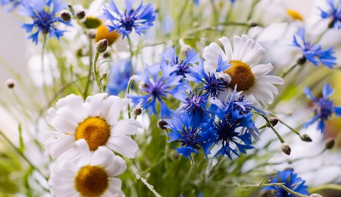 фото цветы полевые - Поиск в Google   Цветы, Фото цветов ...