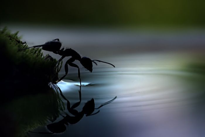 Ant and water !