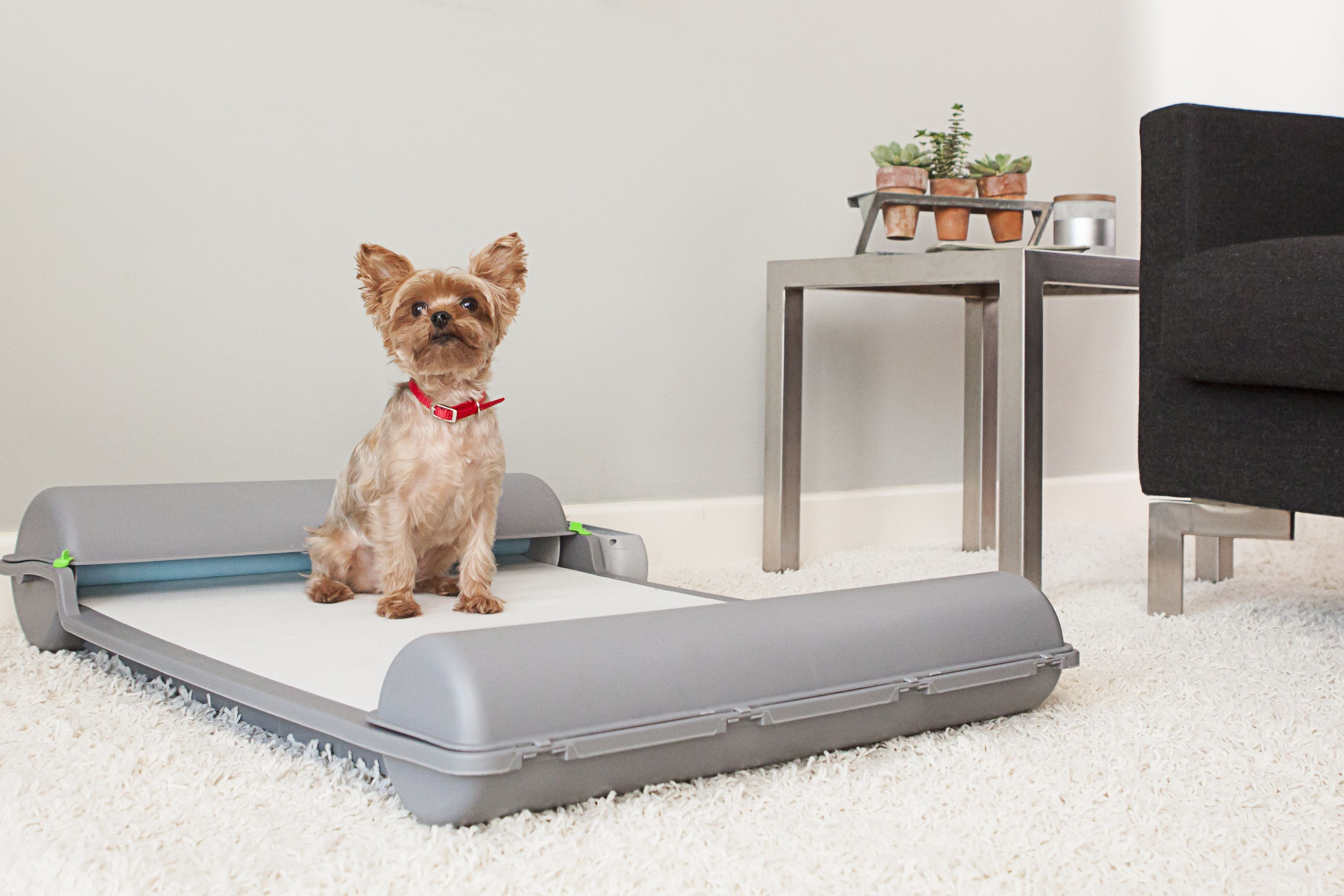 Brilliantpad Is A Smart Dog Toilet That Just May Improve Your Relationship With Fluffy Indoor Dog Potty Dog Toilet Dog Potty