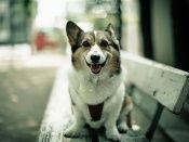 Dog on a bench wallpaper