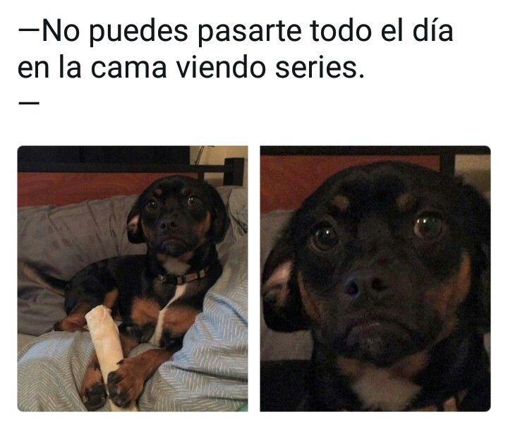 Terrible Hd Memes Perros Mascotas Memes Memes Divertidos