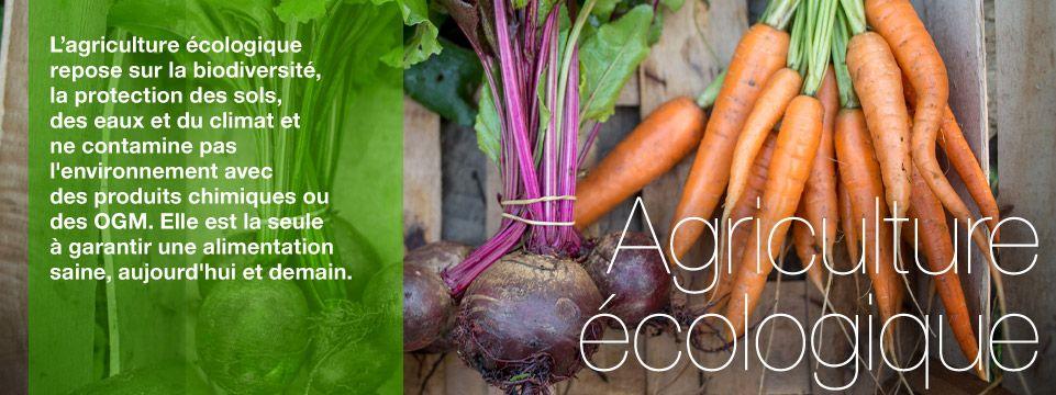 Le combat de Greenpeace pour une agriculture écologique et contre les OGM en plein champ.