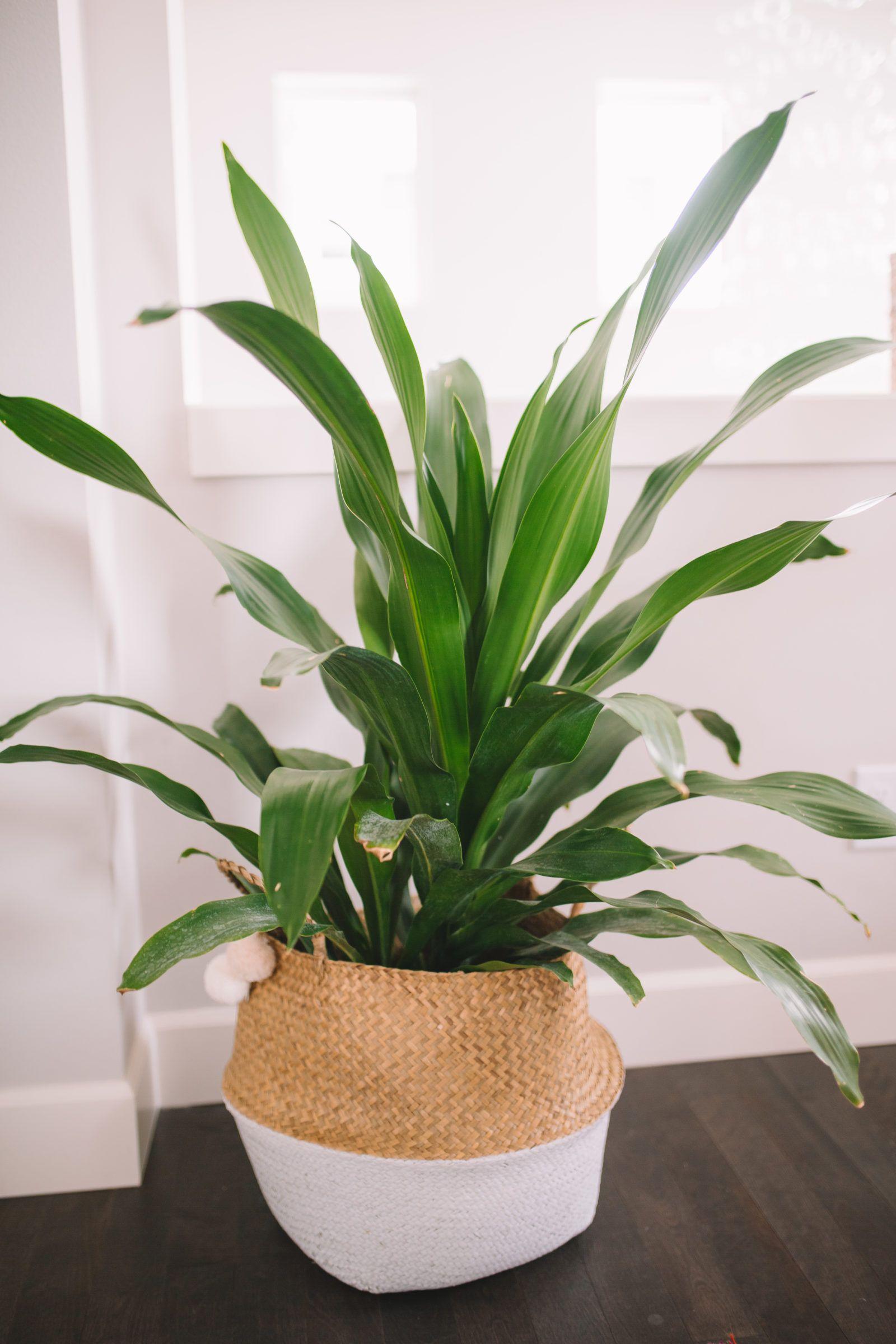 7 Common Houseplants AirPurifying Indoor Plants Common
