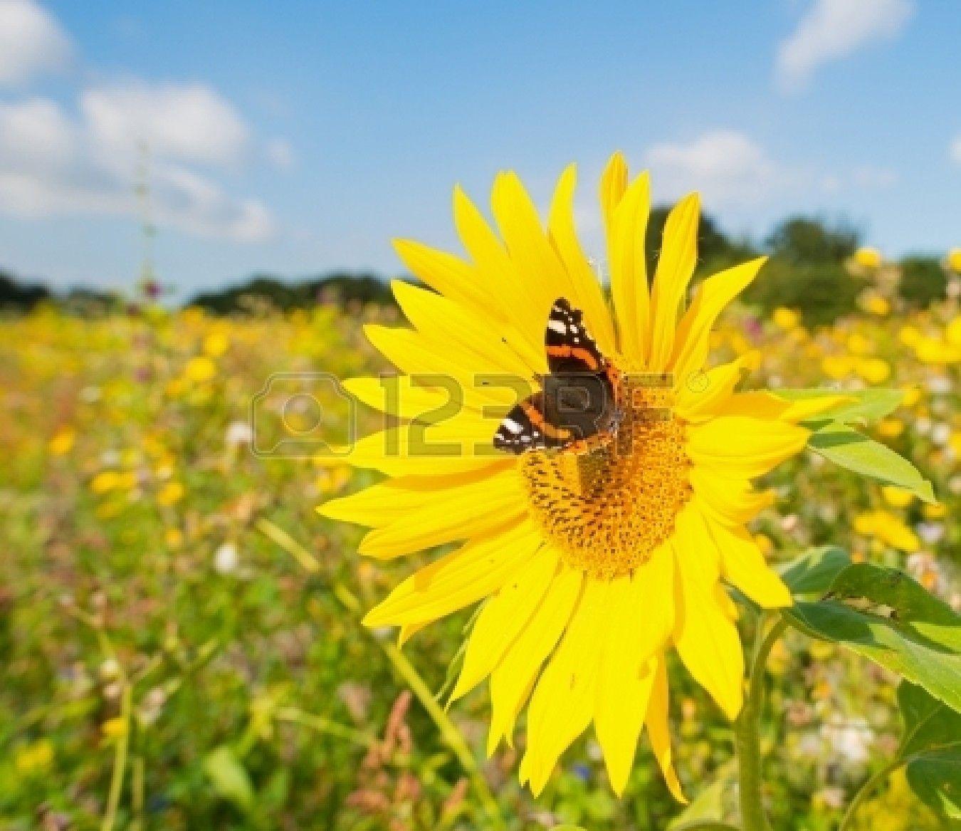 Papillon dans le champ de fleurs - Papillon fleur ...