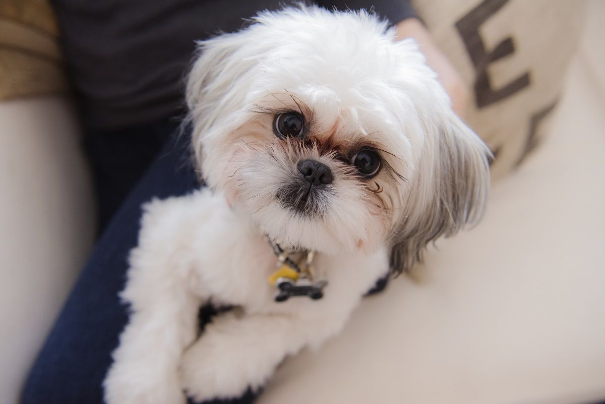 Pin On Pet Health Wellness