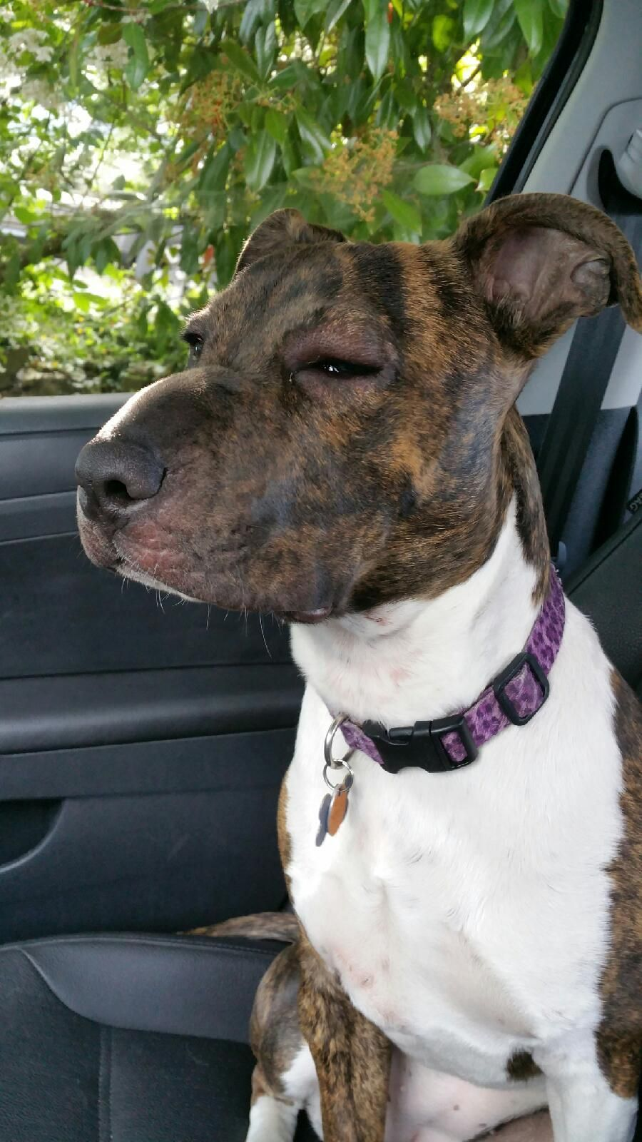 23 dogs that learned about bees the hard way Bee dog