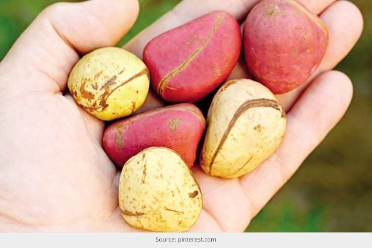 Kola Nut Health Benefits: All-Natural Therapeutic Remedy